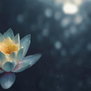 fiore che raffigura i benefici della meditazione